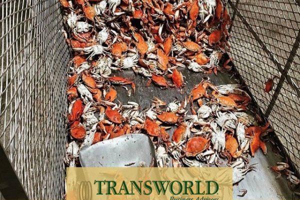 Seafood Wholesale tba fayettville
